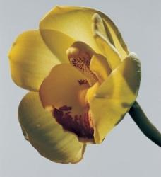 黄色的花朵图片