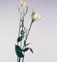 白色花朵图片
