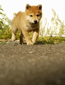 小狗狗图片