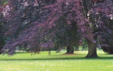 大树底下的绿草坪图片