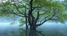 湖泊中大树图片